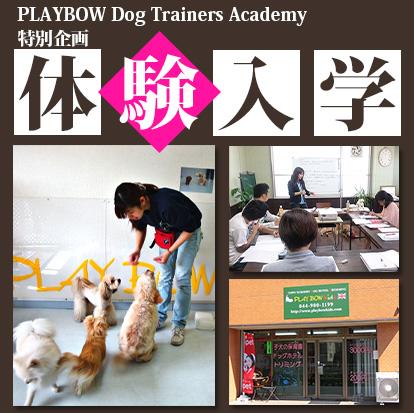 ドッグトレーナー養成スクールの授業と実習を特別体験!