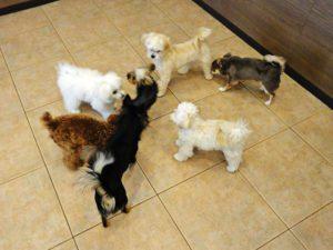 犬の保育園 イメージ