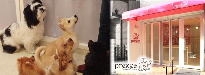 犬の保育園とドッグトレーニング