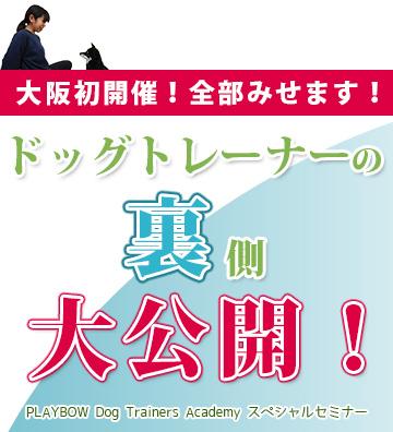 【大阪】ドッグトレーナーの裏側大公開!